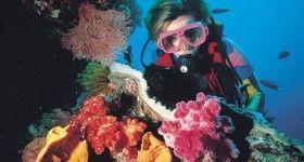 012809Diving - Great Barrier Reef